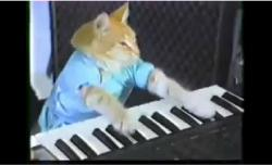 Keyboard Cat Keyboard Cat